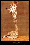 mama und kind giraffe-der erste kuss.jpg