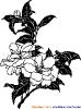 cinska kyticka3.jpg
